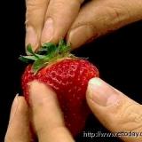 小心吃到毒草莓