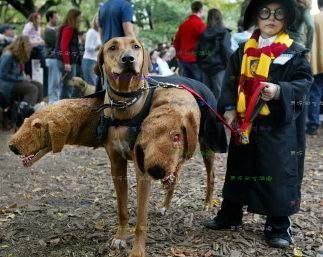 哈利波特的三頭狗